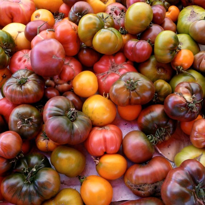 Tomato, Mozzarella and Basil – a HolyTrinity