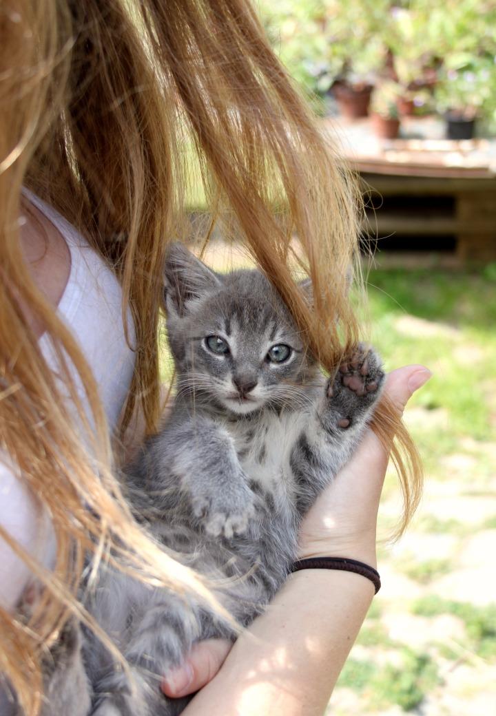 DK kitten